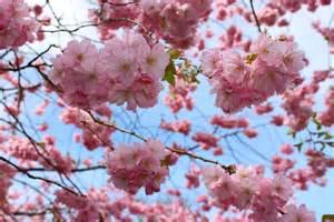 ¿Quieres saber si sufres Astenia Primaveral?