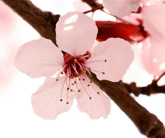 Las Flores de Bach y los trastornos primaverales